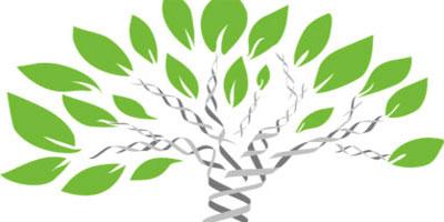 Геномные и эпигеномные механизмы адаптации древесных видов