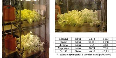 Биопрепарат (хвойный экстракт). Влияние на урожай растений